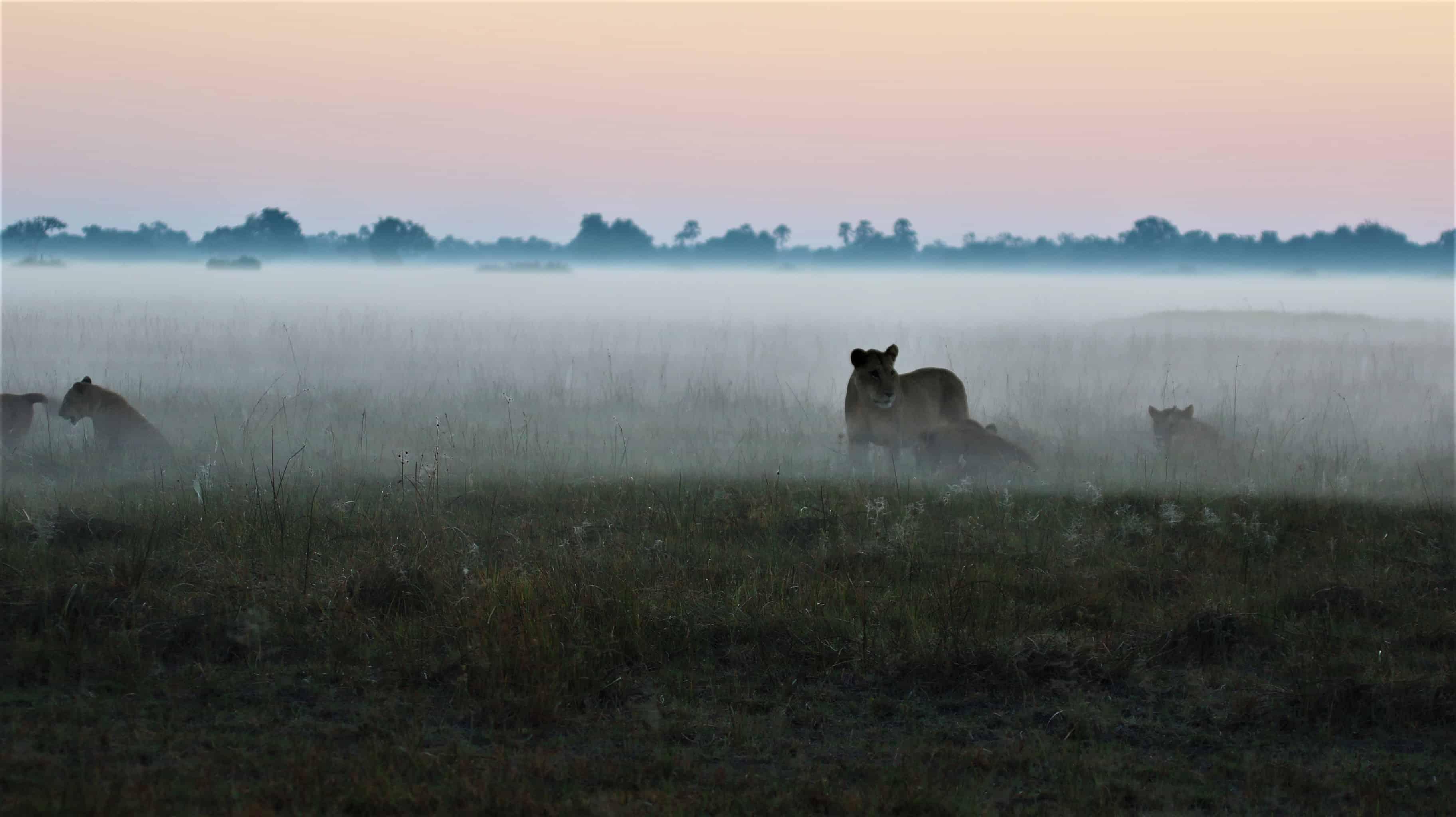 Mombo Camp April 2018 | Taga Safaris