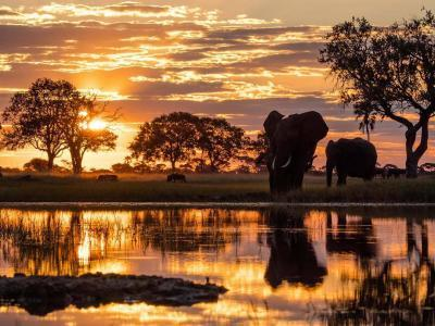 Wilderness Safaris Top Ten Images from Instagram | African Safari with Taga