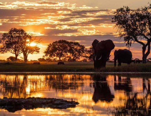 Wilderness Safaris Top Ten Images from Instagram