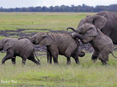 elephants masai mara