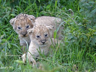 May in the Masai Mara | Taga Safaris