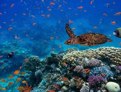 5 surprising facts about coral reefs