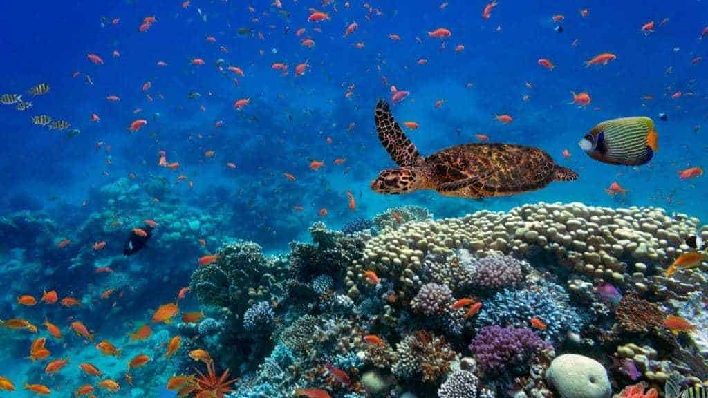 5 surprising facts about coral reefs | Taga Safaris