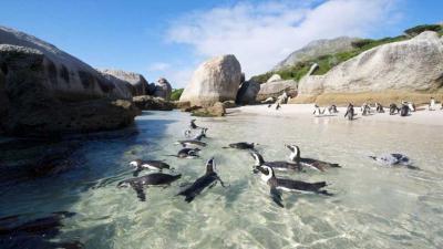Cape Town Tours | African Safari with Taga