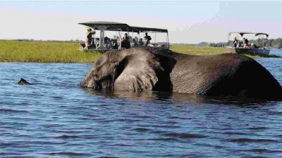 Chobe National Park | African Safari with Taga