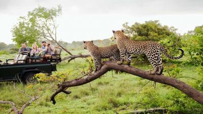 Greater Kruger Park | African Safari with Taga