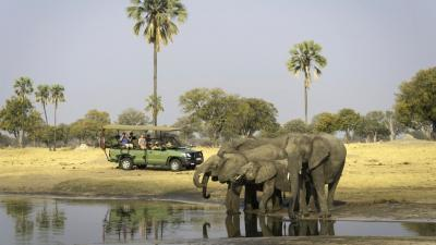 Hwange National Park | African Safari with Taga