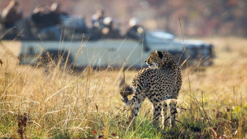 Lost in Africa | African Safaris with Taga