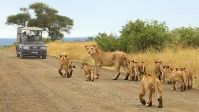 Kruger National Park | African Safari with Taga