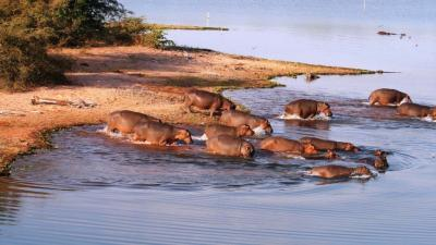 Lake Kariba | African Safari with Taga