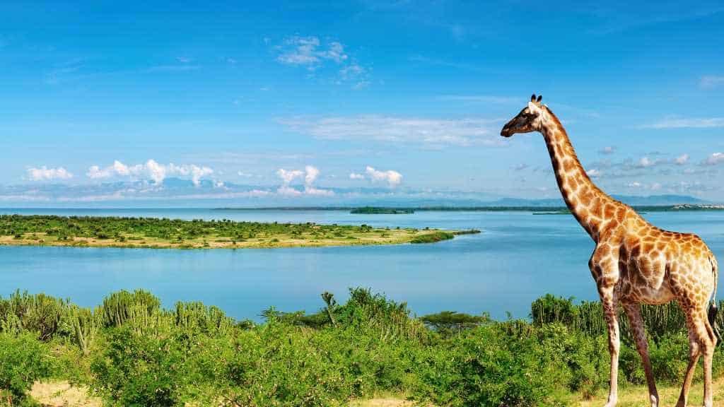Uganda Safari Lodges and Camps | African Safaris with Taga