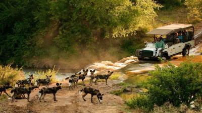 Madikwe Game Reserve | African Safari with Taga