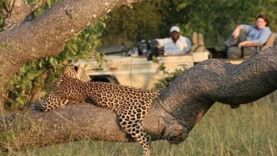 Manyeleti Game Reserve | African Safari with Taga