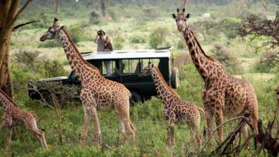 Masai Mara Game Reserve   African Safari with Taga