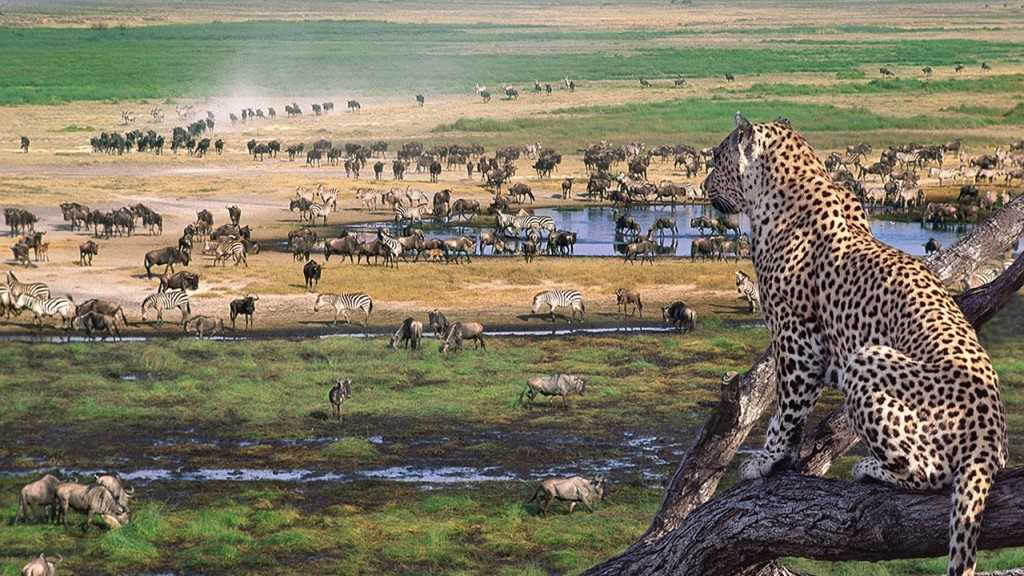 Tanzania Safari Lodges and Camps | African Safaris with Taga