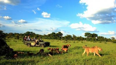 Sabi Sands Game Reserve | African Safari with Taga