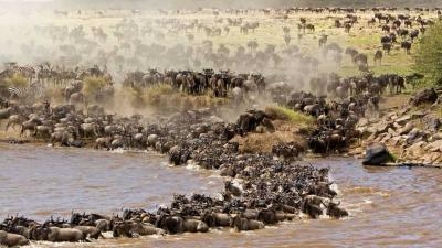 Serengeti National Park | African Safari with Taga
