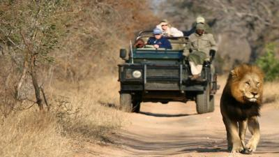 Thornybush Game Reserve | African Safari with Taga