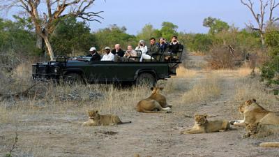 Timbavati Game Reserve | African Safari with Taga