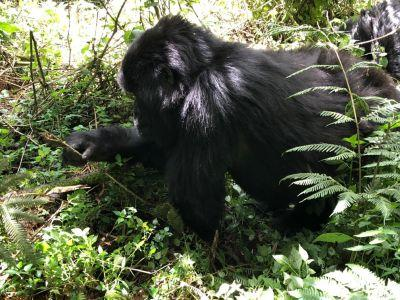 May at Sabyinyo Silverback Lodge | Taga Safaris