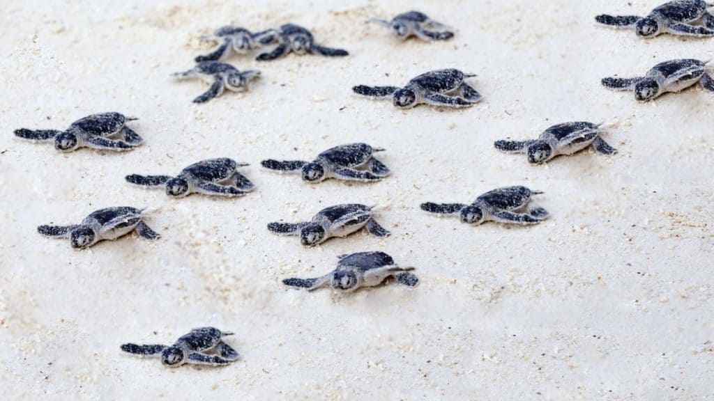 Life lessons from a turtle | African Safari with Taga