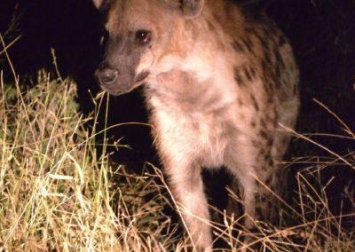 Rosettes vs Spots | Taga Safaris