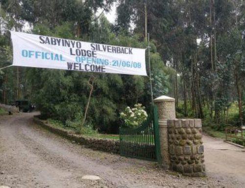June at Sabyinyo Silverback Lodge