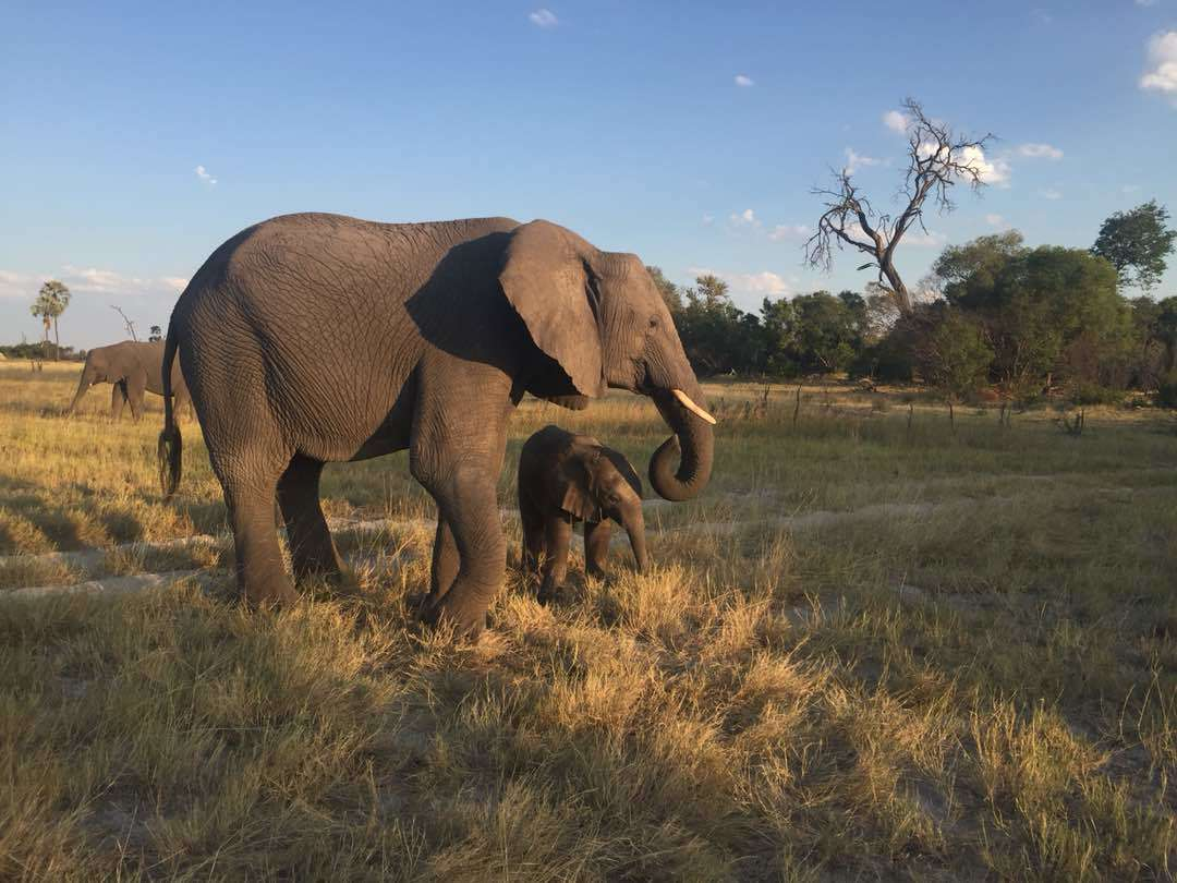 Abu Camp - April 2018 | Taga Safaris