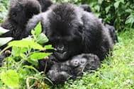 Bisate May 2018 | African Safari with Taga