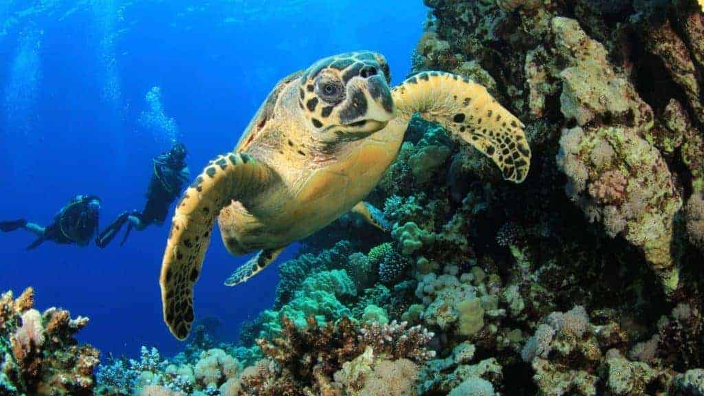 Life lessons from a turtle | African Safaris with Taga
