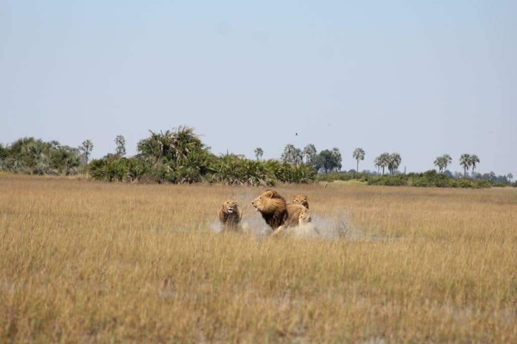 Jacana Camp - April 2018 | African Safari with Taga