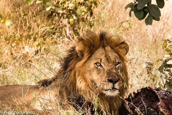 Kings Pool - April 2018 | Taga Safaris