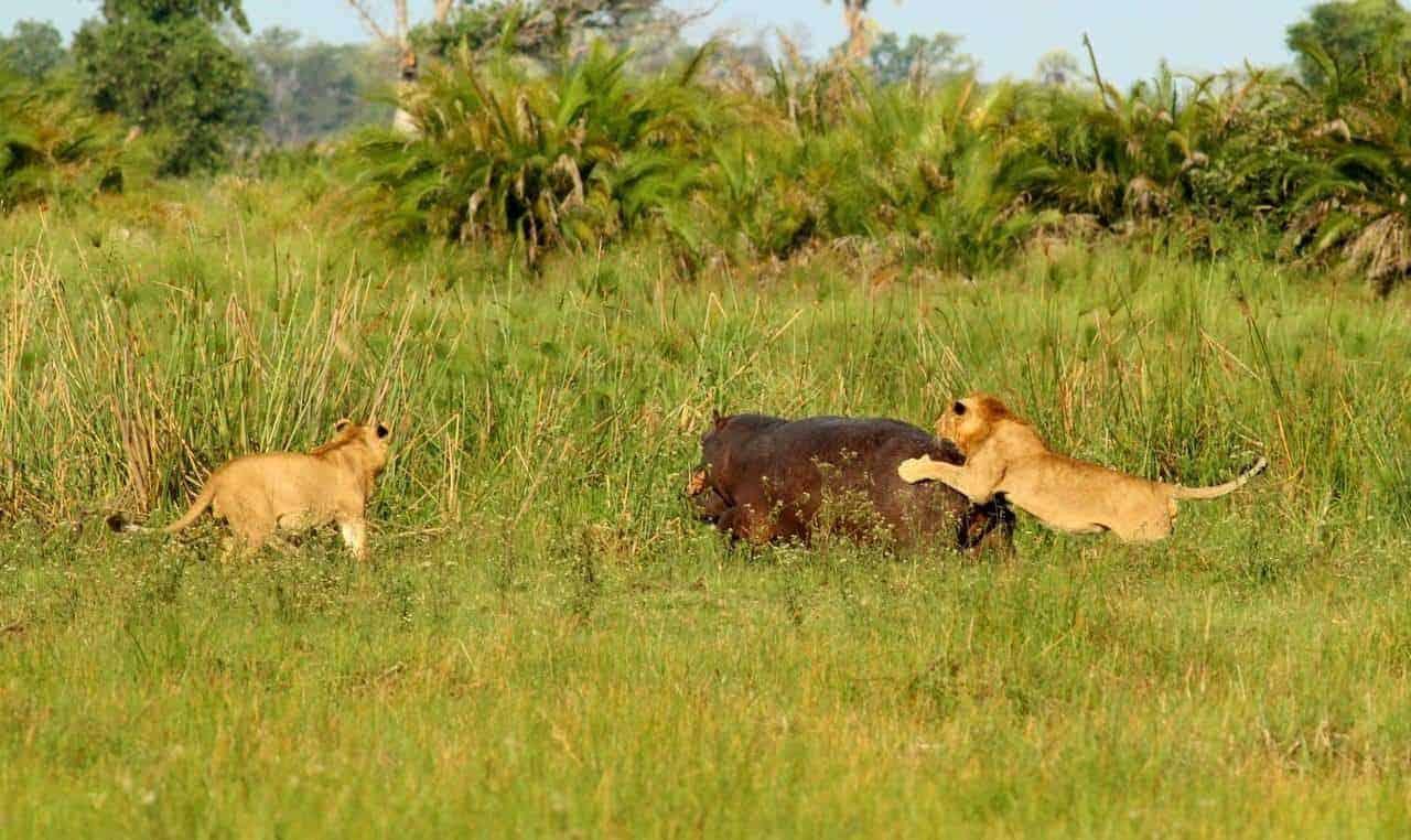 Kwetsani - March 2018 | Taga Safaris