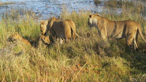 Seba Camp - April 2018 | African Safari with Taga