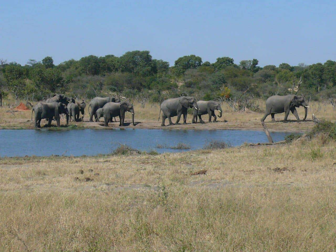 The Hwange Road Less Travelled | Taga Safaris