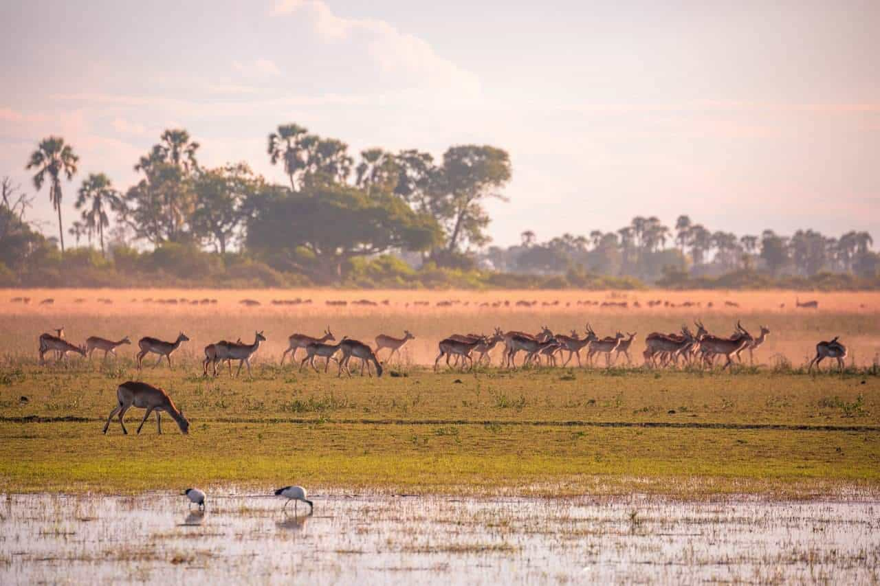 Jao - April 2018 | Taga Safaris