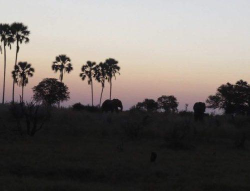 Seba Camp – April 2018
