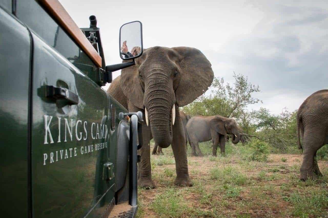 Photographic Safaris in South Africa: Everything You Need to Know | African Safari with Taga