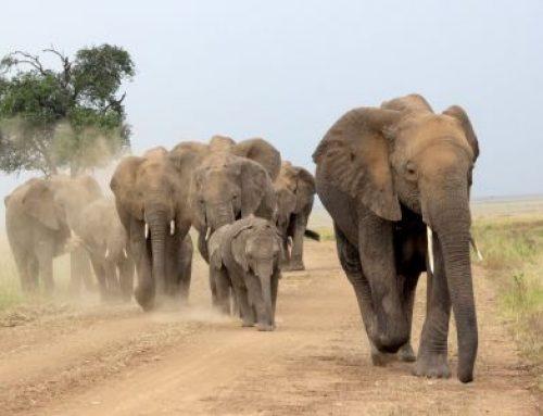 June in the Masai Mara