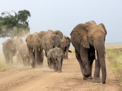 African Safaris   African Safaris with Taga