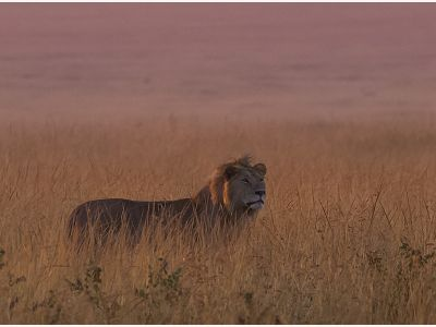 June in the Masai Mara | Taga Safaris