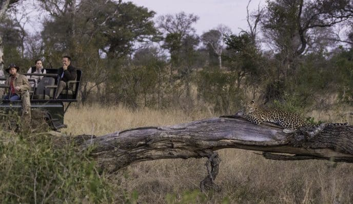 Against all odds | African Safari with Taga