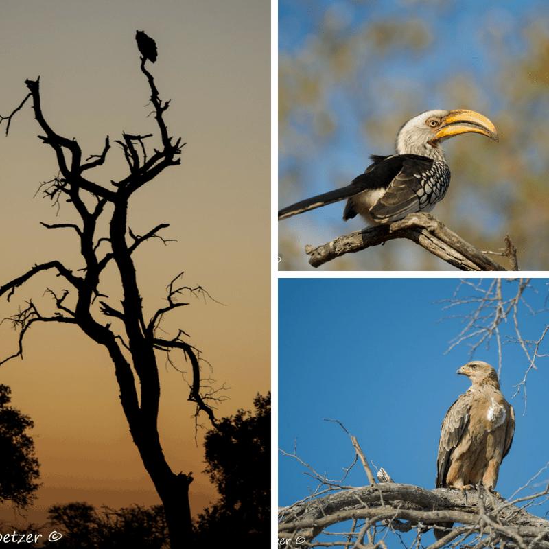 Kings Camp Rangers Report: June 2018 | African Safari with Taga