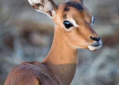 On the Prowl | African Safari with Taga