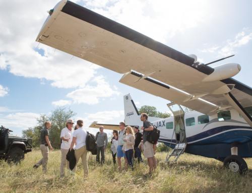 Kruger vs. Madikwe: The Ultimate South Africa Safari Battle