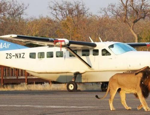 Air transfer services: part of the travel experience