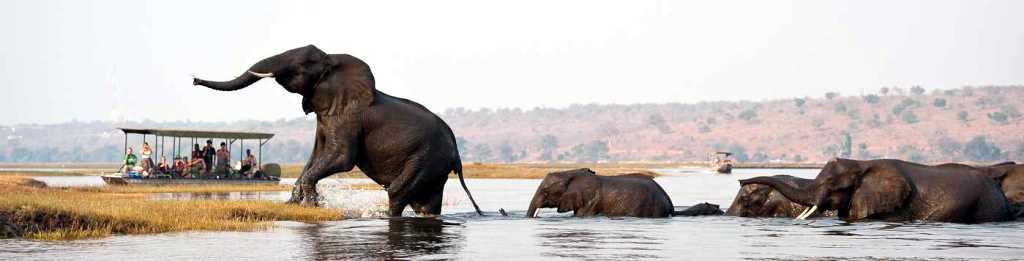 Chobe River - Ultimate African Safari