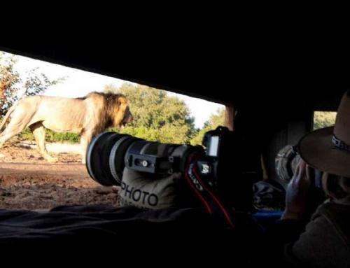 Mashatu Hide Safari