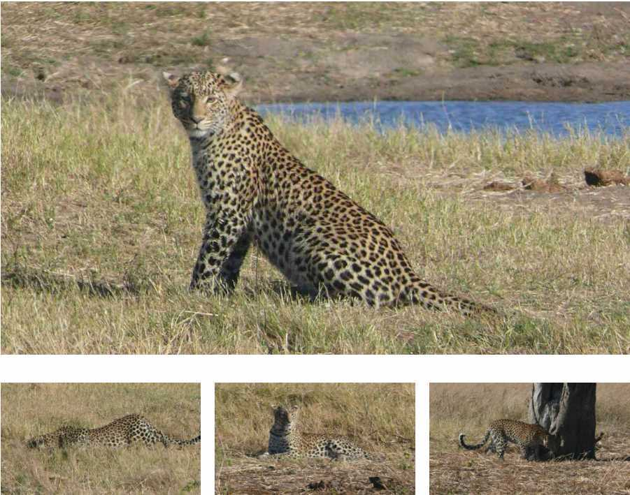 Mr B and the Inquisitive Cat | African Safari with Taga
