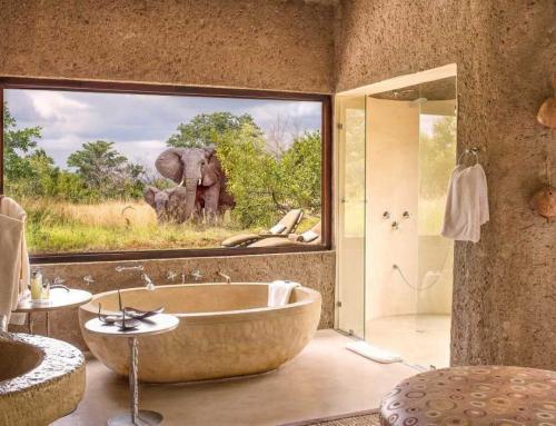 Spellbound on Safari